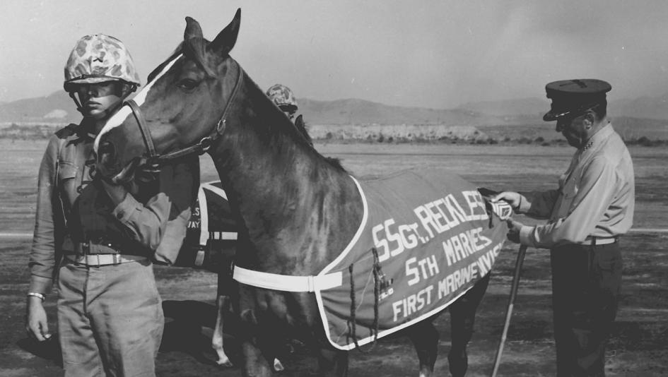 Staff Sergeant stripes being pinned to Sergeant Reckless' uniform