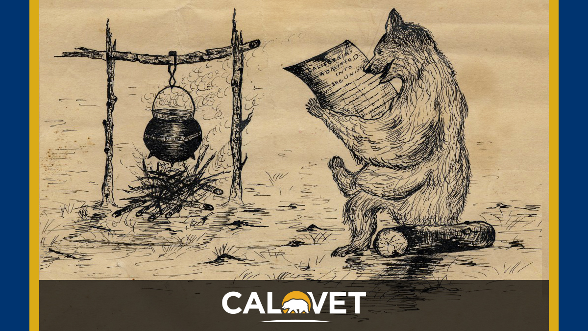 An illustration, pen on paper, of a bear sitting on a log near a campfire reading the headlines CA admitted into the union.